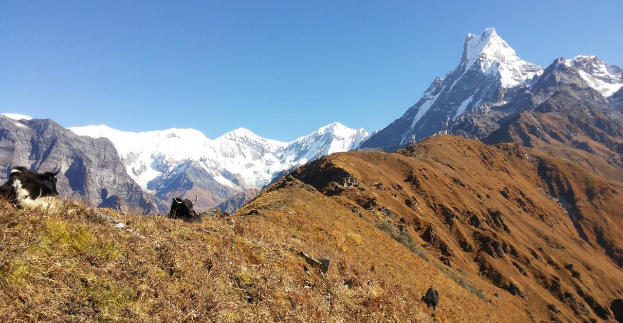 Mardi Himal Trek (Annapurna Region)