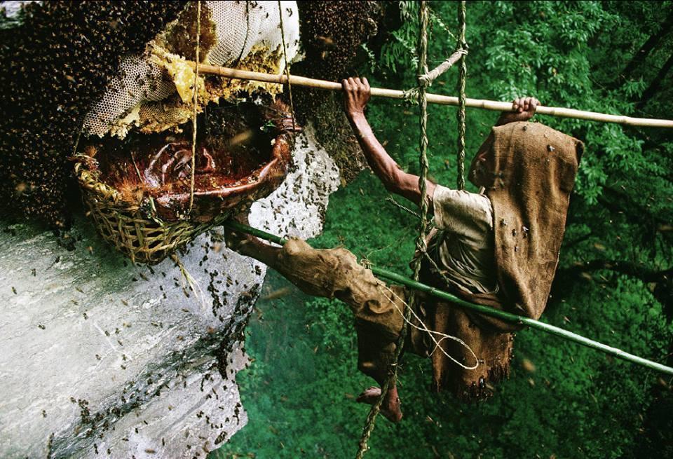 8 days Honey Hunting Trip
