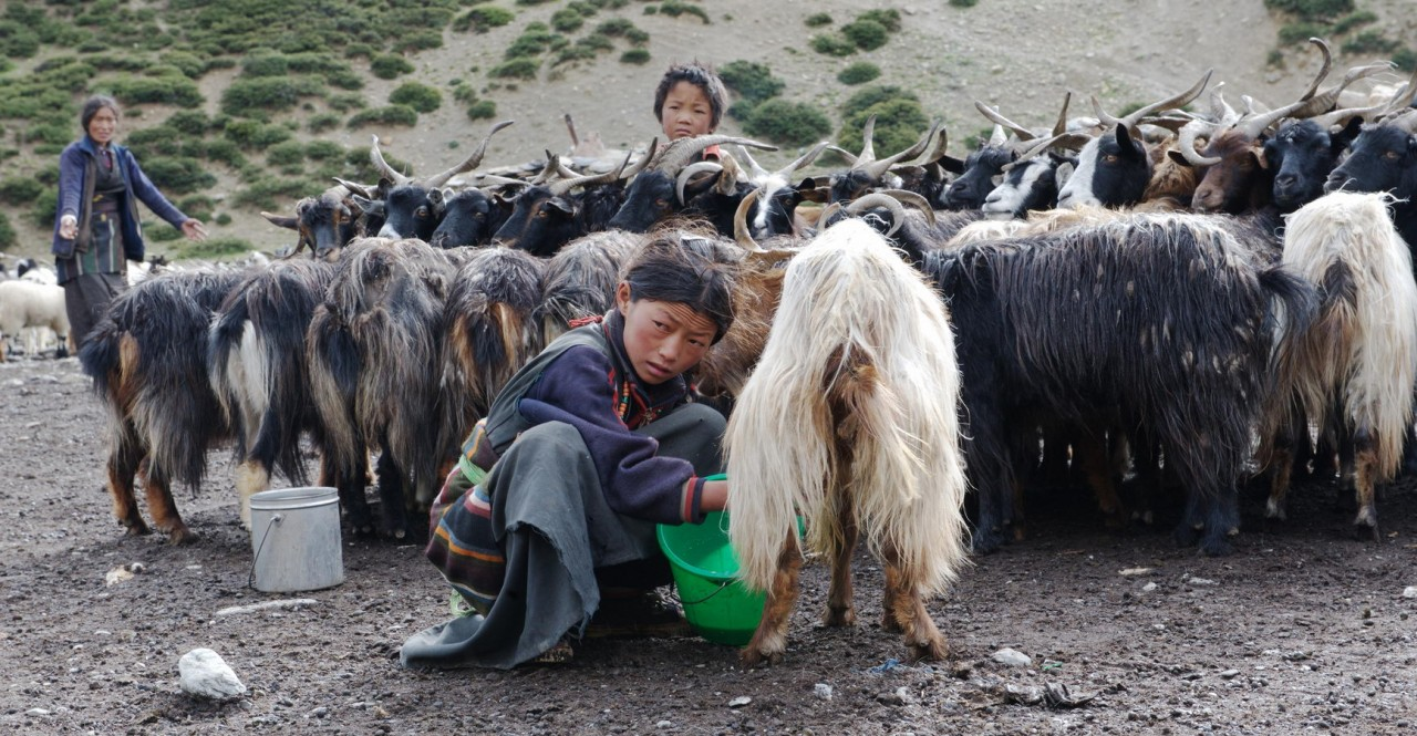 Dolpo Jomsom Trek with Dhaulagiri Sightseeing