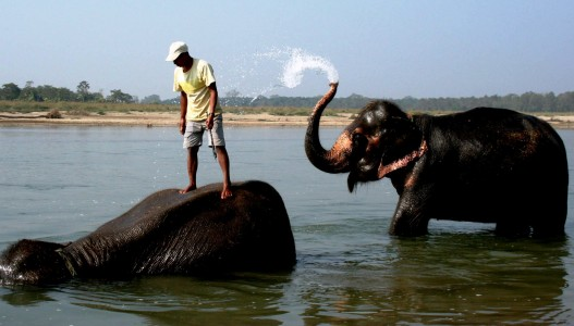 Nepal Nature Tour